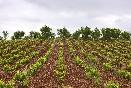 preciosa foto de uno de los viñedos