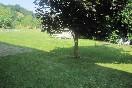 Mikelestonea i-jardín