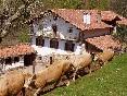 Casa-urruska-vacas