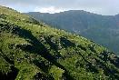 Los Pirineos en Verano