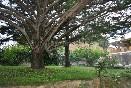 Jardín3