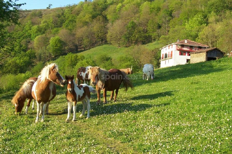 nuestros ponis y casa
