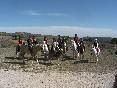 Ruta pony