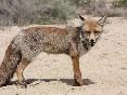 Fauna-bardenas-reales