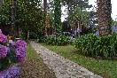 Jardin palmeras2
