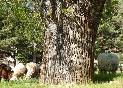 Casa-rural-los-castaños-ovejas