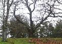 Casa-rural-los-castaños-sierra-árbol