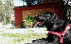 Playa taray mascotas
