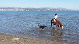Camping ampolla playa_rutas-a-caballo