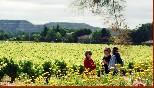 Las visitas se realizan en un marco incomparable a pie de viña
