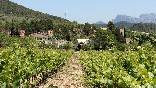 Casa y viñedos