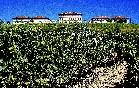 Vista de Bodegas Rioja Vega