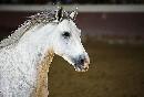10 caballo en libertad