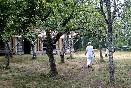 Bosque-casaterra