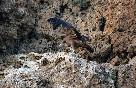 Rutas ornitologicas (1)