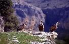 Rutas ornitologicas (7)