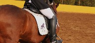 Montar a caballo
