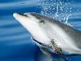 Delfines mulares (3)