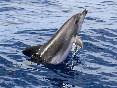 Delfines mulares (4)