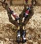 Bodegas-senorio-de-la-estrella-botellas-