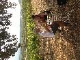 UN vino en el viñedo de Samaniego