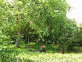 El-nogal-amplio-jardín
