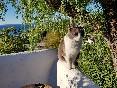 Villa-la-saliega-gato