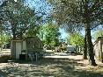 Parcela-camping-arboles-sombra-pino--803127507