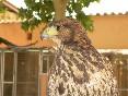 águila can sala