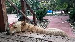 Mascota disfrutando de las vacaciones en las casas de la vega
