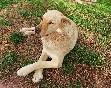 Perro disfrutando de las vacaciones en Las casas de La Vega