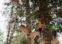 aventuras entre árboles