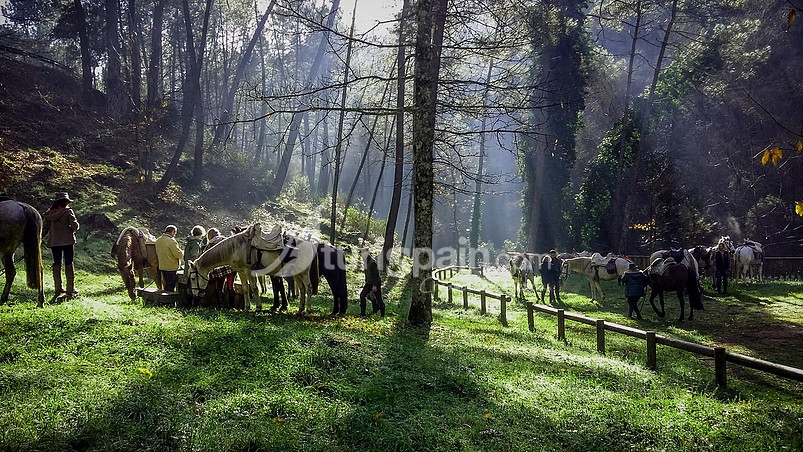 Ribera del rio pelayos