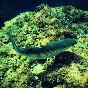 Snorkel illes medes (2)