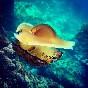 Snorkel illes medes (3)