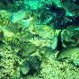 Snorkel illes medes (17)