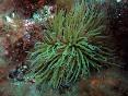 Snorkel illes medes (20)