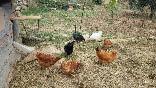 degustacion huevos camperos