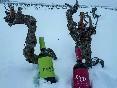 Nieve el vino del desierto