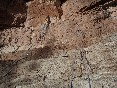 Guies-arania-pared