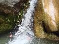 Barracosguies-arania-salto
