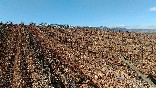 Viñazagros-viñedos