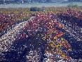 los viñedos foto 1
