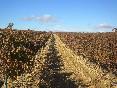 los viñedos f2oto