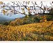 Viña Torgo otoño 2