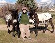 Burritas-mora-y-bonita-paseando-con-burros