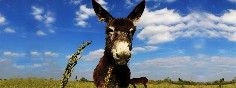 Paseando-con-burros-burgos
