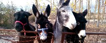 Turismo-rural-con-niños-paseando-con-burros