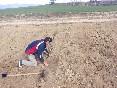 Plantando olivos