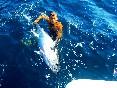 Actividades pesca (5)